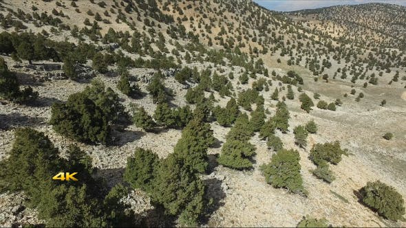 sparse trees aerial videohive preview