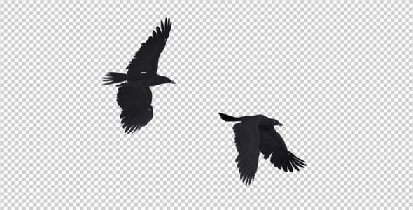 Two Black Birds Flying Over Screen by VarioFocus | VideoHive