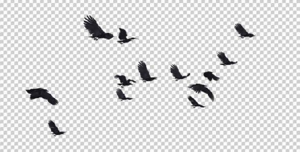 13 Black Birds Flying Over Screen Iii By Variofocus Videohive