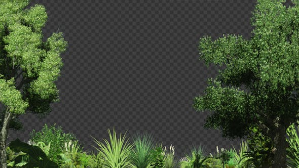 Beautiful Edge Of Forest Background By Se5d Videohive