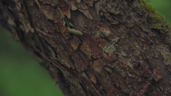 Camera Pans Through The Texture Of A Tree Trunk Against Forest Background Stock Footage
