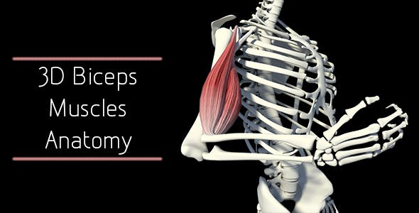 3D Bicep Muscles Anatomy by madi7779 | VideoHive
