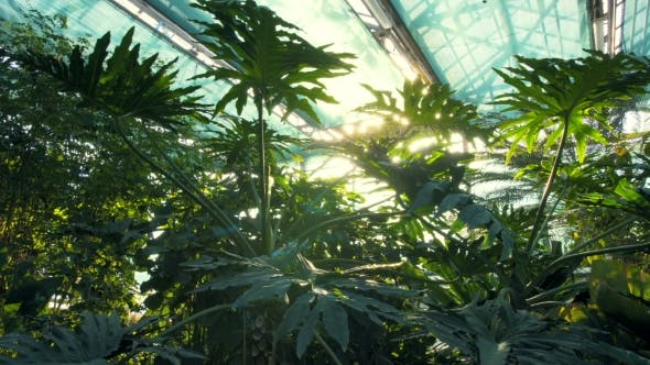 Surprising Forest In Greenhouse By Dimabalanfilms Videohive Home Interior And Landscaping Oversignezvosmurscom