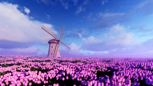 Windmill And Field Of Purple Flowers By Animix Videohive