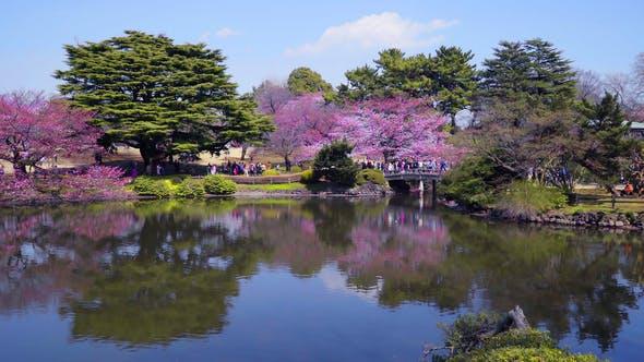 Sakura Park by AndrVlad | VideoHive