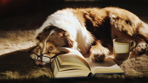 A Dog in Glasses Is Dozing Near an Open Book  Nearby Is a