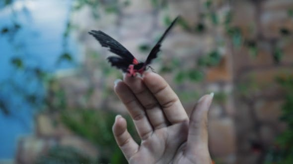 Butterfly on the Hands of Man by megaalex115 | VideoHive
