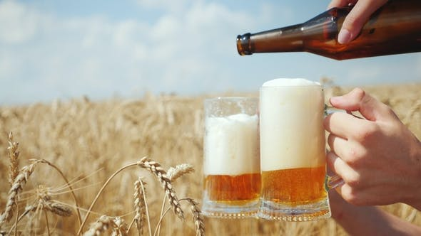 Pour a Cool Beer in a Mug on the Field of Ripe Golden Wheat