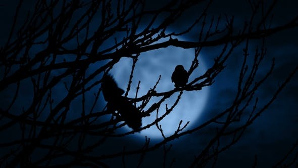 Birds Fly Off Lit Up By Moon At Night By Rockfordmedia Videohive