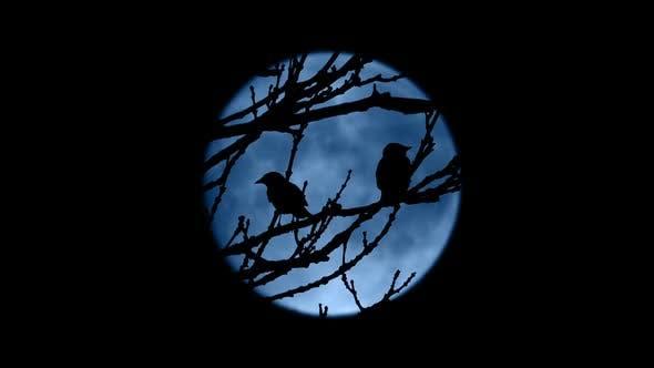 Birds Fly Off Tree Framed By Moon At Night By Rockfordmedia