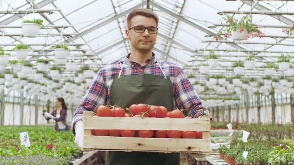 Happy Farmer Walks with Box full of Tomatoes Through