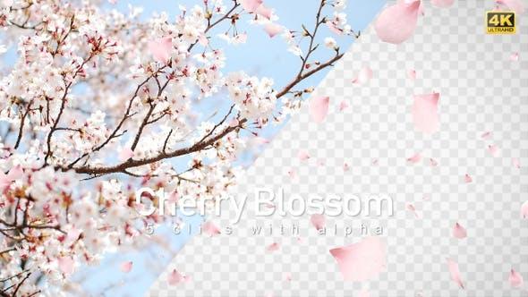Cherry Blossom / Sakura Falling by bank508 | VideoHive