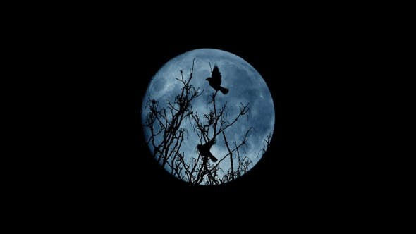 Birds Fly Off Tree Top At Night By Rockfordmedia Videohive