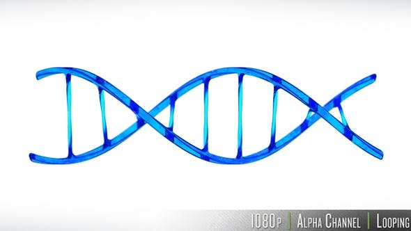 DNA Double Helix Strand Loop by butlerm | VideoHive